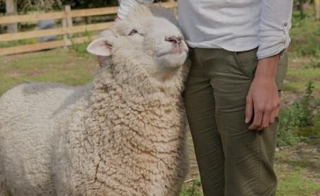 a woman petting a fluffy and happy sheep