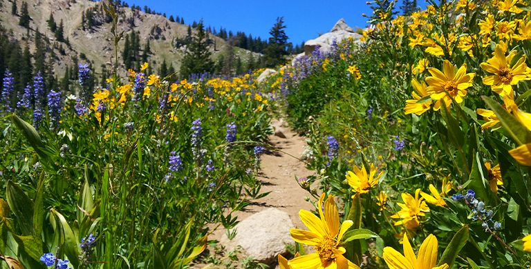 Looking for something to do with Mom this Mother's Day? Why not soak up the natural beauty of a wildflower hike? Here are eight of the best wildflower hikes in the U.S.