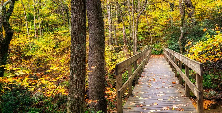 As the foliage starts to drop, hiking trails morph into magical wonderlands. Here are 6 facts about the science behind the changing of the leaves.